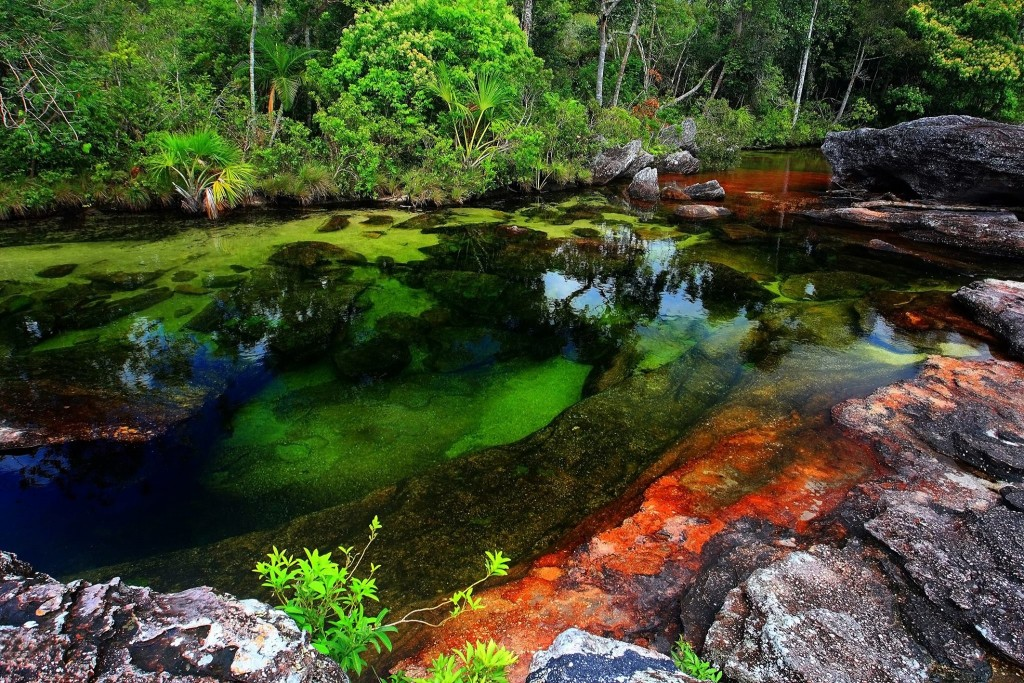 Río de Cinco Colores, Caño Cristales, Colombia