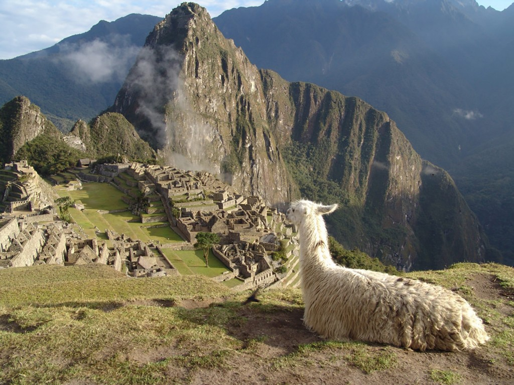 Llamas, Machu Pichu, Perú